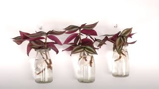 How to Decorate Wandering Jew in Cute Small Glass Bottles for Wall Hanging