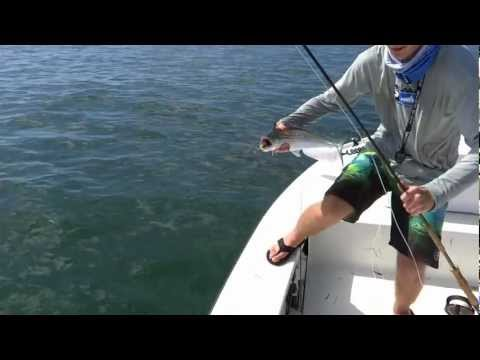 Fly Fishing Mackerel Tampa Bay