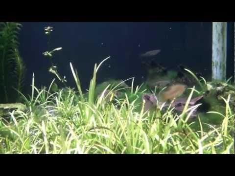 名古屋市立東山動植物園 世界のメダカ館