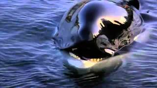 Free Willy - Ruf der Freiheit (Michael Jackson - Will you be there)  - YouTube.flv