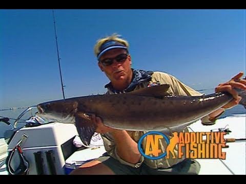 Addictive Fishing: Tampa Tactics - INSHORE FISHING for redfish and cobia