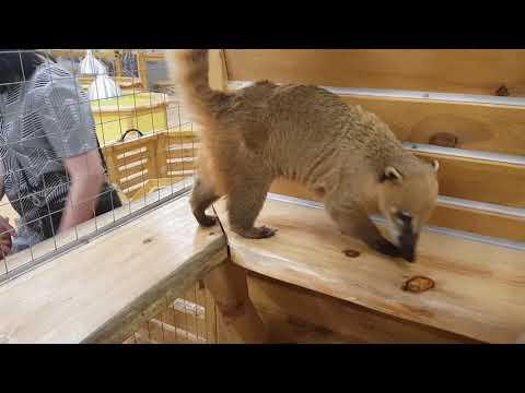 Контактный зоопарк Тольятти. Проверка карманов.