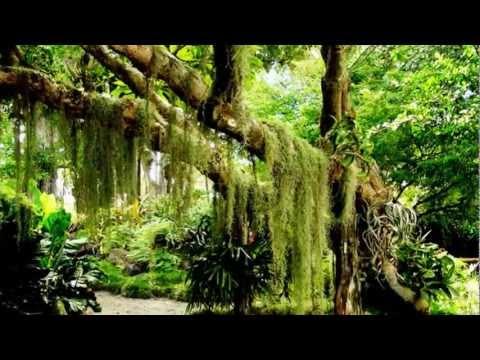 大自然音樂 Nature music -晨歌 (森林狂想曲)Morning song (forest Rhapsody)