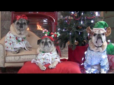 Cutest Pugs Christmas Tree Joy
