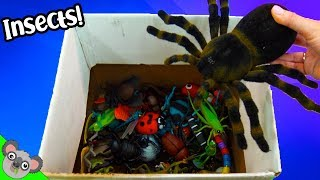 Learn INSECT NAMES + COLORS! Bugs and Lizard Toy Learning for Kids by Koalafied Fun