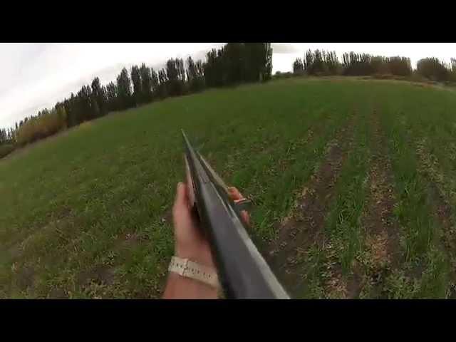 Caceria de liebres con escopeta (en primera persona) GoPro