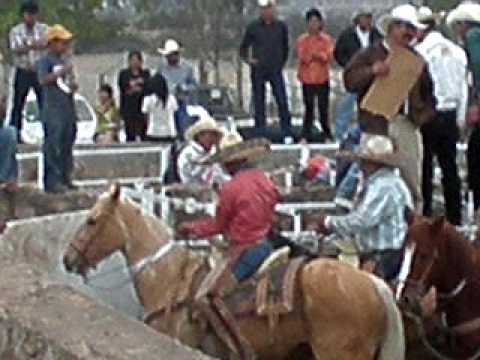 SUCHIL COLEADERO EL 1 DE ENERO DEL 2010