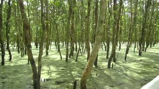 Watch Mekong Delta Sanctuary video