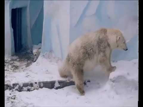Авторская Песня - Арктика