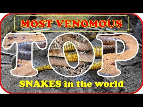 Top 10 Most Venomous Snakes in