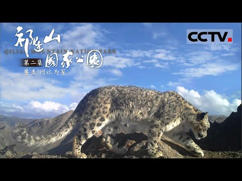 中國-祁連山國家公園