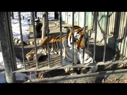 おびひろ動物園 Obihiro-Zoo  TATSUO