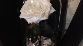 Розы в колбе оптом. Лучшего качества