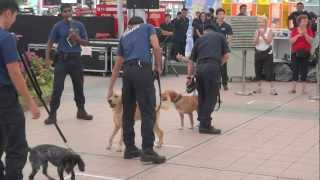 Singapore Police force K-9 Unit at Home Team Career Fair 2012