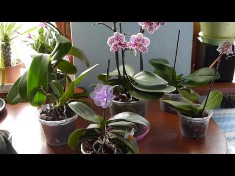 Какие орхидеи нужно удобрять?...