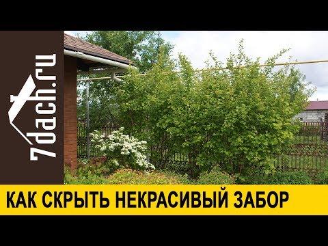 🏡 Как скрыть некрасивый забор: растения, которые с этим отлично справятся - 7 дач