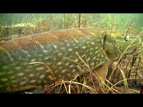 съемки ловли рыб