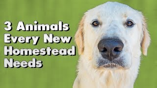 3 Animals Every New Homestead Needs