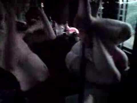 Pleyboy Free MP4 Video Download - 1