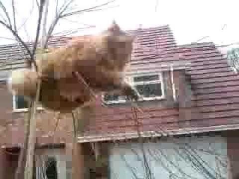 Fat cat small tree