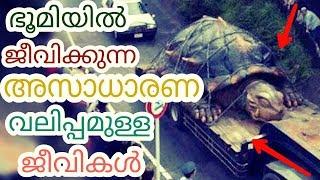ഭൂമിയിൽ ജീവിക്കുന്ന അസാധാരണ വലിപ്പമുള്ള ജീവികൾ | Abnormally Large Animals | Malayalam | QNA