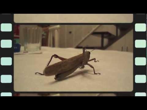 a cena con la Cavalletta dinner with the Grasshopp...