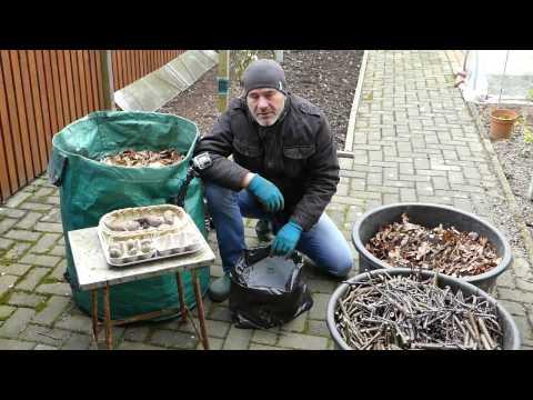 Kartoffeln anbauen - in der Tonne und im Sack