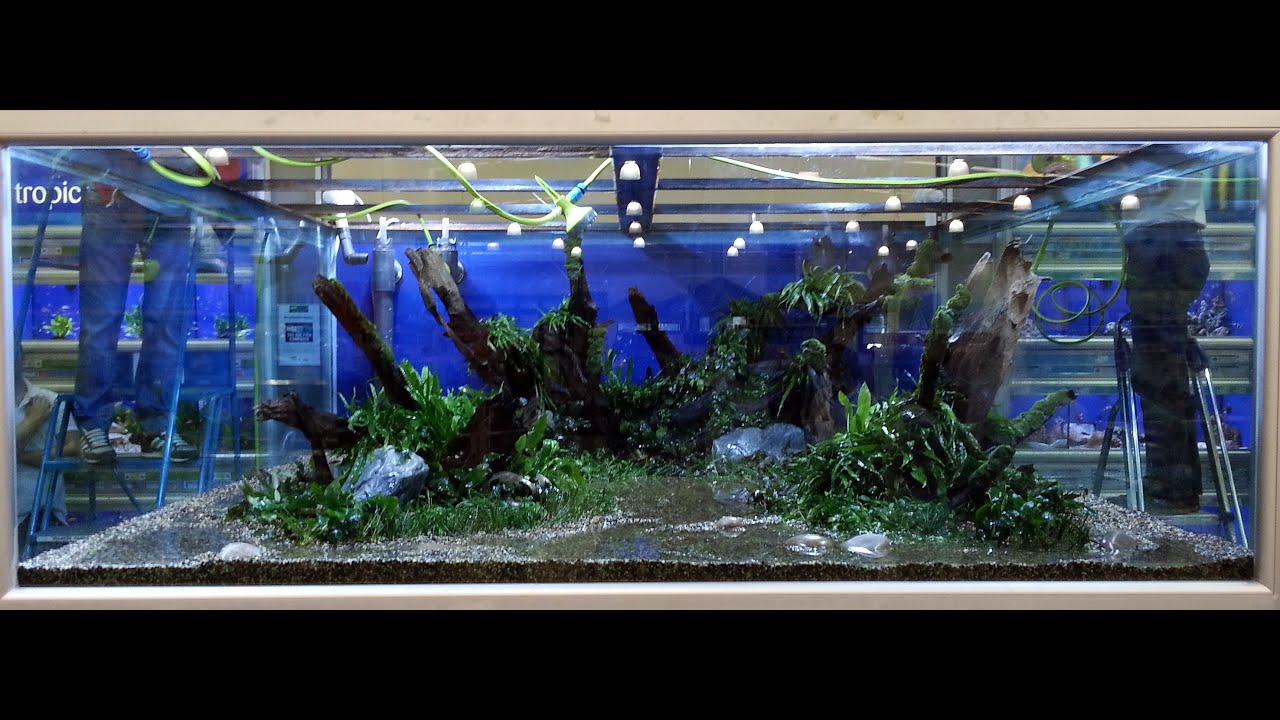 Huge planted tank 10000l hd youtube for Large fish tank