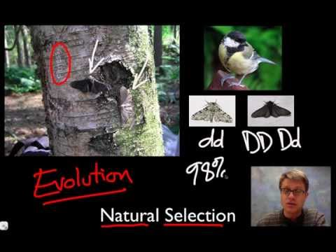 Unit 1 Review - Natural Selection