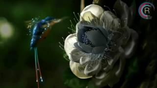 Aurosonic & Denis Karpinskiy & Kate Louise Smith - Heaven (Progressive Mix)