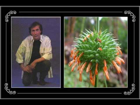 Frank Michael - Tous les bouquets se fanent