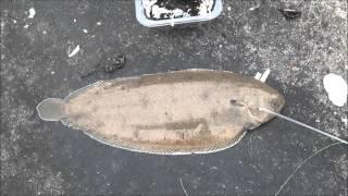 Middelgrote tong gevangen vanaf het zuiderhavenhoofd 21-9-2015