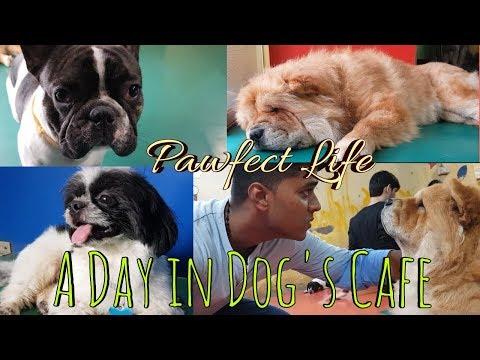 A Day In Dog's Cafe || Pawfect Life || Rajeev Rajguru Vlogs || Dog Day Care || Marol,Mumbai