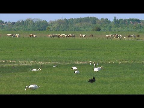 Lairoux : 500 bêtes à l'ouverture du communal