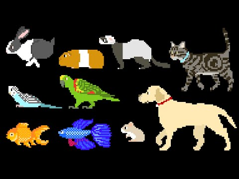 Pets - Dog, Cat, Rabbit, Fish, Birds, Hamster & More - The Kids' Picture Show (Fun & Educational)