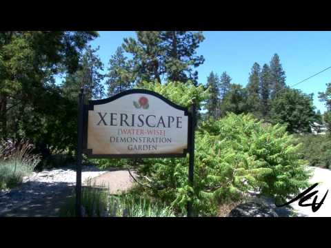 Xeriscape Summer Garden -  flowers and hummingbird -  YouTube