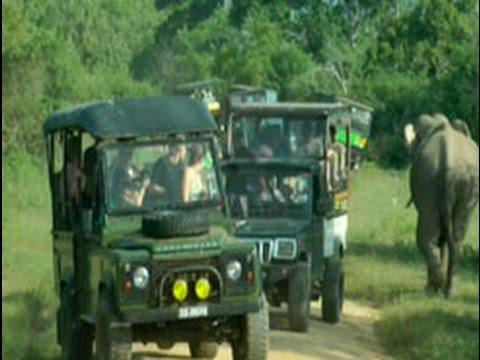safari drivers ignor|eng