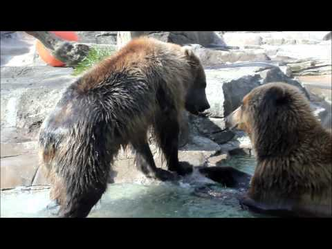 Indianapolis Zoo - Bears will be Bears