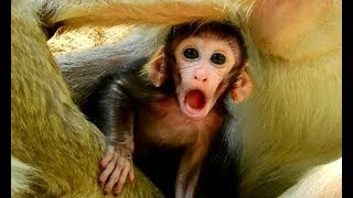 WOOW ! Cameraman verry surprise see Funny face Malo verry cute | Why Malo open bigg mouth like this