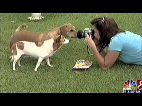 Hawaii Pet Photographer featured on KHNL News on Oahu