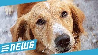Hund misshandelt? Film gestorben! - FLIPPS News