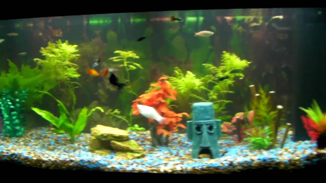 Jungle Natral Tropical Tank Cool Unusual Fish. - YouTube
