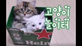 고양이에게 박스는 좋은놀이터! 귀여운고양이동영상