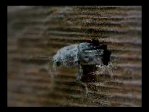 Carcomas-tratamiento-madera.avi