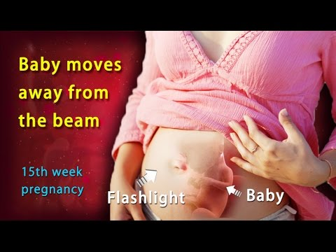 ... Weeks Pregnant: A Complete Guide on 15th Week of Pregnancy - YouTube