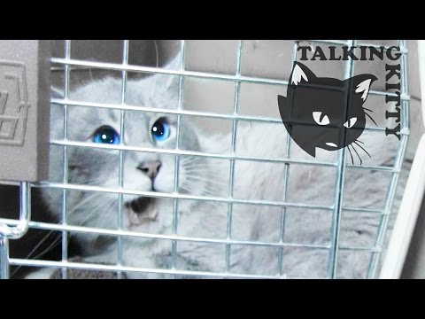 Talking Kitty Cat 34 - Save Gibson