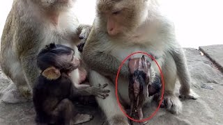 RIP ! Death Of Cute Baby Monkey In 3rd Day Mum Still Regret ST250