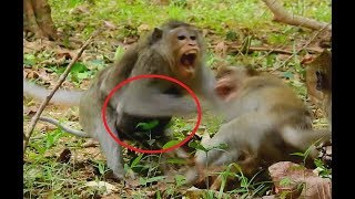 Why Mom not Care Small Baby? Mom Hug Baby in chest bite with Male Monkey, Baby So Scare.
