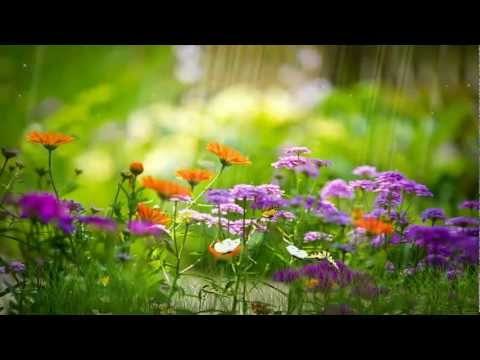 картинки на рабочий стол природа цветы № 516382  скачать