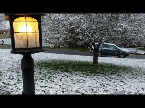 Снег на цветах Cincinnati Ohio
